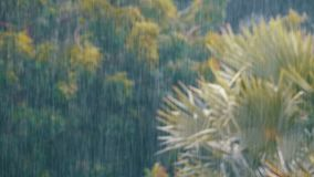 Tropical Rainstorm in the Jungle against the backdrop of a Green Forest with a Palm Tree. Tropical wind and rain drops falling on the green palm tree leaves stock footage