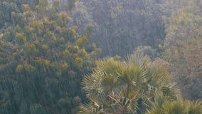 Tropical Rainstorm in the Jungle against the backdrop of a Green Forest with a Palm Tree. Tropical wind and rain drops falling on the green palm tree leaves stock video