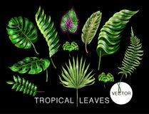 Tropical realistic palm, monstera, banana and fern leaves. Set isolated on black background. Vector illustration. Tropical realistic palm, monstera, banana and Stock Photos