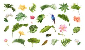 Tropical realistic plants animals and flowers set royalty free illustration