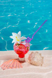 Tropical red cocktail on caribbean sand flower and seashell Stock Image