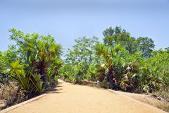Tropical red gravel drive road path Stock Photography