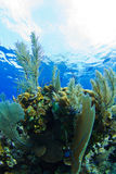 A tropical reef Stock Images