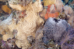 Tropical Reef Royalty Free Stock Images