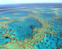 Tropical Reef. The Great Barrier Reef, Queensland, Australia Royalty Free Stock Photos