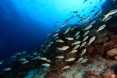 Tropical reef Royalty Free Stock Photos