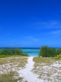Tropical Reef. A view of Anegada beautiful reef from a small sand dune Royalty Free Stock Image