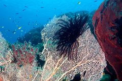 Tropical Reef. Fish and sea fans on the reef, underwater Royalty Free Stock Photos