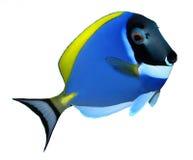 Tropical reef fish. Surgeonfish - Zebrasoma - isolated on white background Stock Photos