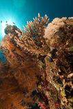 Tropical reef and fish in the Red Sea. Royalty Free Stock Photography