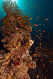 Tropical reef and fish in the Red Sea. Stock Photos
