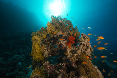 Tropical reef and fish in the Red Sea. Stock Photo