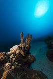 Tropical reef and fish in the Red Sea. Stock Photography