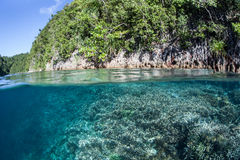 Tropical Reef and Limestone Island. Corals grow near a limestone island in Raja Ampat, Indonesia. This pretty area is known for its high marine biodiversity and Stock Image
