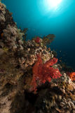Tropical reef in the Red Sea. Stock Photo