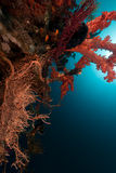 Tropical reef in the Red Sea. Stock Image