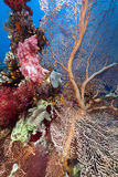 Tropical reef in the Red Sea. Stock Photos