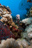 Tropical reef in the Red Sea. Royalty Free Stock Photos
