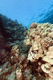 Tropical reef in the Red Sea. Stock Images