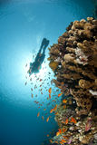 Tropical reef scene with scuba diver silhouette. Stock Photo