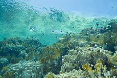 A tropical reef scene in shallow water. Royalty Free Stock Photography