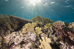 Tropical reefscape in shallow water. Stock Images