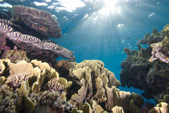 Tropical reefscape in shallow water. Royalty Free Stock Image