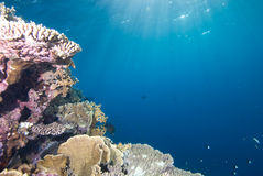 Tropical reefscape in shallow water. Royalty Free Stock Photo