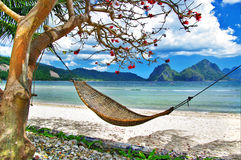 Tropical relax. Tranquil tropical scene on deserted tropical island Royalty Free Stock Photo