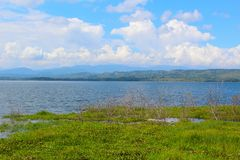 Tropical Reservoir. Plants and brush on the banks of a full reservoir in the Venezuelan state of Barinas Royalty Free Stock Photos