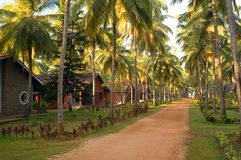 Tropical resort. State of Kerala, India Royalty Free Stock Images
