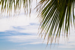 Tropical resort. Blue sky and palm leaves Royalty Free Stock Photos