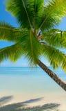 Tropical resort bora bora Royalty Free Stock Photo