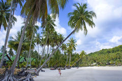 Tropical resort with a green lagoon and palm tree. Royalty Free Stock Images