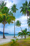 Tropical resort with a green lagoon and palm tree Royalty Free Stock Photos