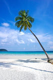 Tropical resort with a green lagoon and palm tree Stock Photos
