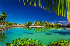 Tropical resort with a green lagoon and palm trees. Around the frame Royalty Free Stock Photo