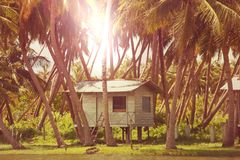 Tropical resort. Hut in jungle stock photos