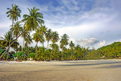 Tropical resort with many palm trees. Paradise nature,. Hotel house on the tropical beach Royalty Free Stock Image