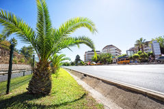 Tropical resort with palm tree Royalty Free Stock Images