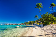 Tropical resort with sandy beach and palm trees on Moorea. French Polynesia Royalty Free Stock Image