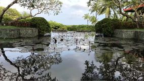 Tropical resort, tropical landscape. Bali island, Indonesia. Tropical resort, tropical landscape. Bali island Indonesia Asia stock video