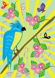 Tropical ridiculous parrot Royalty Free Stock Images