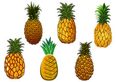 Tropical ripe yellow pineapple fruits Royalty Free Stock Image