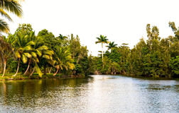 Tropical river Stock Photos