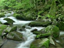 Tropical river Stock Photos