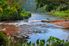 Tropical River Stock Photography
