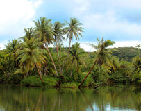 Tropical River. The beautiful sights of the Ugum River that runs through Guam Royalty Free Stock Photo