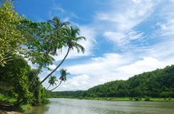 Tropical river Stock Photo