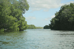 Tropical river on the Amazon. Stock Photo